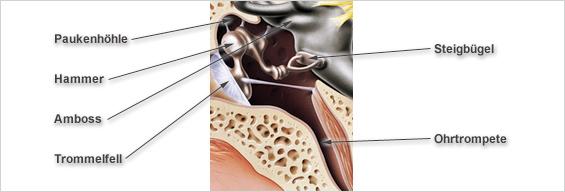 Ohr Anatomie Mittelohr